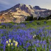Mount rainier washington fields HD wallpaper