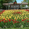 Stadtbilder Tulpen holland  HD wallpaper