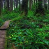 Beautiful forest path HD wallpaper