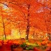 Autumn has arrived are you pleased HD wallpaper
