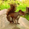 Attention loving squirrell HD wallpaper