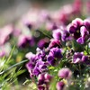 Flowers grass bokeh purple HD wallpaper