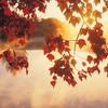Nature autumn HD wallpaper