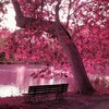 Trees purple bench lakes HD wallpaper