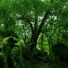 Moss rainforest HD wallpaper