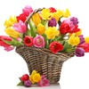 Spring basket flowers HD wallpaper