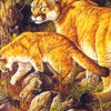 Puma with cub HD wallpaper