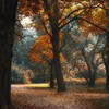 Landscapes nature trees autumn garden paths enchanted HD wallpaper