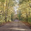 Pretty forest road HD wallpaper