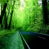 Green forest road HD wallpaper