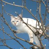 Chat blanc dans un arbre  HD wallpaper