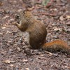Squirrels on camping ground HD wallpaper