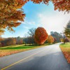 Landscapes nature trees autumn roadway HD wallpaper