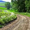 Road to the farm  HD wallpaper