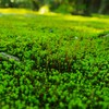 Nature plants macro depth of field HD wallpaper
