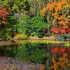 Water japan nature autumn HD wallpaper