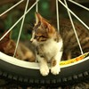 Animals bicycles cats motorbikes pets HD wallpaper