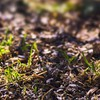 Grass earth seeds focus HD wallpaper