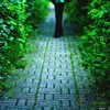 Nature path alley HD wallpaper