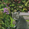 Tabby cat sitting on a bench HD wallpaper