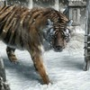 New year animals snow tigers HD wallpaper
