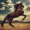 Rising horse HD wallpaper