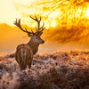 Ice animals deer fauna HD wallpaper