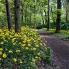 Landscapes nature trees flowers yellow wood path track HD wallpaper