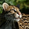 Animals gepard HD wallpaper