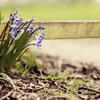 Flowers fences HD wallpaper