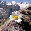 Mountains landscapes flowers daisy HD wallpaper