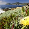 Cape town national park south africa landscapes HD wallpaper
