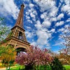 Magnolia tree near eiffel tower HD wallpaper