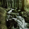 Forests landmark landscapes nature streams HD wallpaper