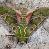 Insects moths HD wallpaper