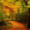 Amazing forest way HD wallpaper