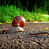 Insects snails HD wallpaper