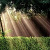 Light landscapes nature sun bushes protection inspiration HD wallpaper