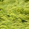 Green nature grass fields HD wallpaper