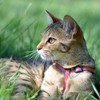 Cats animals grass HD wallpaper