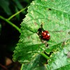Nature plants ladybirds eating HD wallpaper