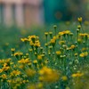 Depth of field flowers nature yellow HD wallpaper