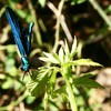 Blue nature dragonflies calabria italia HD wallpaper