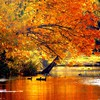 Autumn tale HD wallpaper