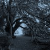 Arbres forestiers branches monochromes  HD wallpaper