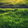 Grass ash HD wallpaper