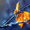 Close-up leaves autumn HD wallpaper