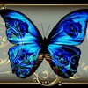Butterfly blue jewelry HD wallpaper