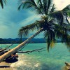 Beach coconut tree HD wallpaper