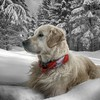 Snow trees animals dogs HD wallpaper